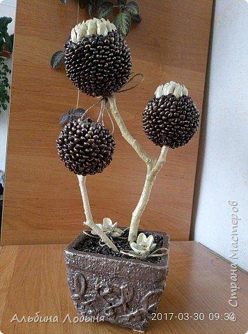 Кофейное деревце, использованы так же скорлупки от фисташек. фото 2
