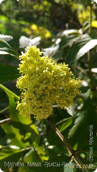 Сейчас моё самое любимое время года.Изумрудная зелень!Майские жуки!Одуряющий запах черёмухи!Пение лягушек! фото 2