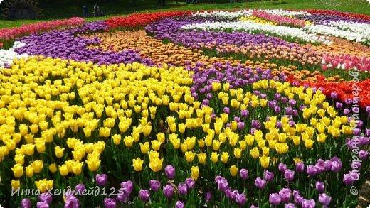 На выходных посетила выставку цветов. Красота природы меня очень вдохновляет. И сразу же села за работу. Давно хотела снять короткий ролик о своем творческом канале и вот появилось большое желание это сделать) фото 1