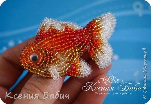 Золотые рыбки фото 5