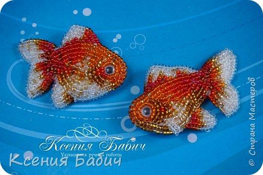 Золотые рыбки фото 3