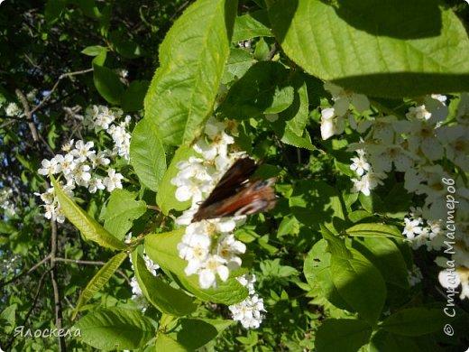 Еще только первая декада мая, а природа уже принарядилась в яркие краски весны и я приглашаю Вас на прогулку в весенний лес. Лес отогрелся и все зазеленело в теплых лучах солнца. фото 5