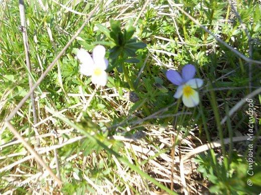 Еще только первая декада мая, а природа уже принарядилась в яркие краски весны и я приглашаю Вас на прогулку в весенний лес. Лес отогрелся и все зазеленело в теплых лучах солнца. фото 10