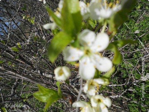 Еще только первая декада мая, а природа уже принарядилась в яркие краски весны и я приглашаю Вас на прогулку в весенний лес. Лес отогрелся и все зазеленело в теплых лучах солнца. фото 6
