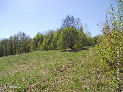 Еще только первая декада мая, а природа уже принарядилась в яркие краски весны и я приглашаю Вас на прогулку в весенний лес. Лес отогрелся и все зазеленело в теплых лучах солнца. фото 2