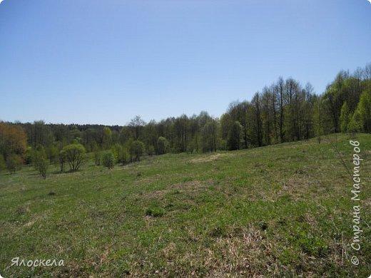 Еще только первая декада мая, а природа уже принарядилась в яркие краски весны и я приглашаю Вас на прогулку в весенний лес. Лес отогрелся и все зазеленело в теплых лучах солнца. фото 1