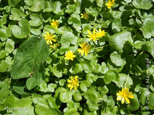Еще только первая декада мая, а природа уже принарядилась в яркие краски весны и я приглашаю Вас на прогулку в весенний лес. Лес отогрелся и все зазеленело в теплых лучах солнца. фото 13