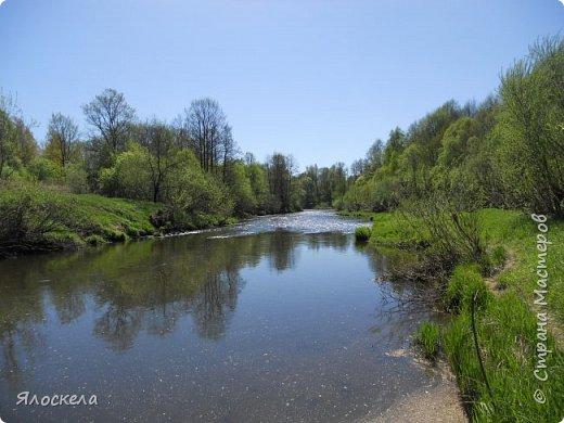 Еще только первая декада мая, а природа уже принарядилась в яркие краски весны и я приглашаю Вас на прогулку в весенний лес. Лес отогрелся и все зазеленело в теплых лучах солнца. фото 15
