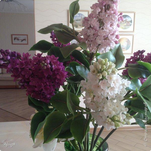 Сирень цветёт не вся ещё, но пару сортов уже распускается... фото 24