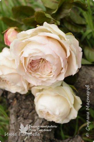 Английские розы из холодного фарфора. фото 2