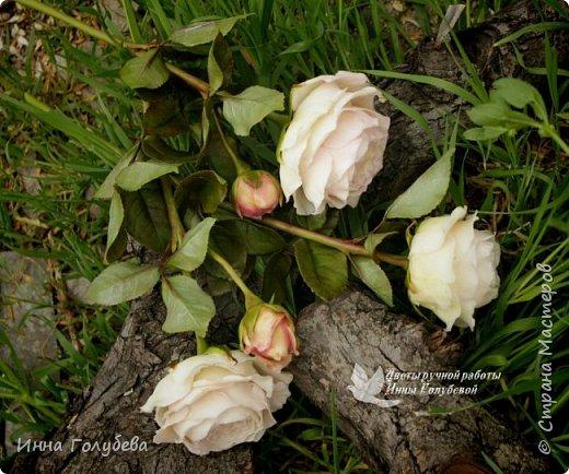 Английские розы из холодного фарфора. фото 11