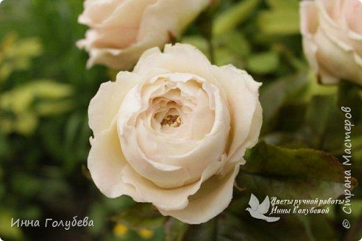Английские розы из холодного фарфора. фото 16