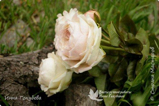 Английские розы из холодного фарфора. фото 13