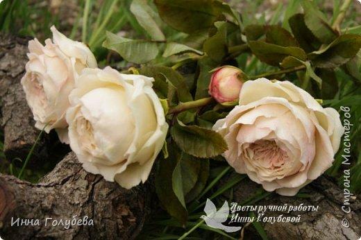 Английские розы из холодного фарфора. фото 10