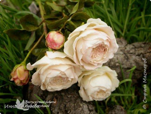 Английские розы из холодного фарфора. фото 14