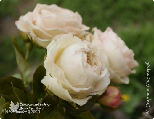 Английские розы из холодного фарфора. фото 9