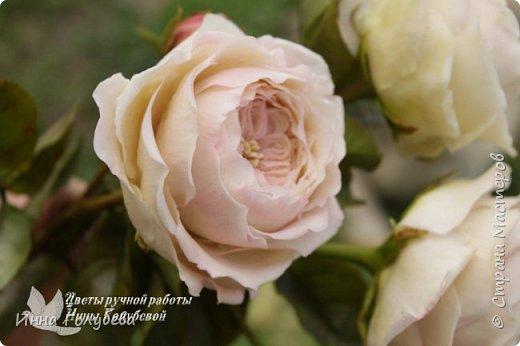 Английские розы из холодного фарфора. фото 6