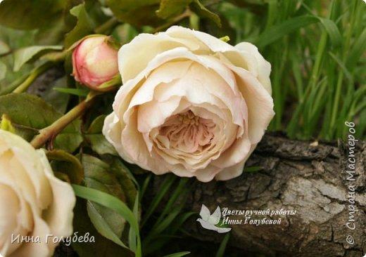 Английские розы из холодного фарфора. фото 8