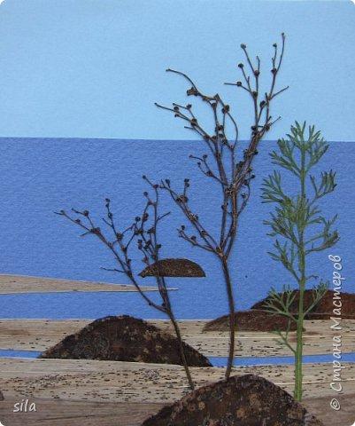 В последнее время увлеклась композициями из засушенных листьев. В лес хожу как в магазин. Попался кусочек сосновой коры, похожий на скалу. Получилась такая композиция - скалистый берег Валаама из летних впечатлений, прекрасное местечко. фото 7