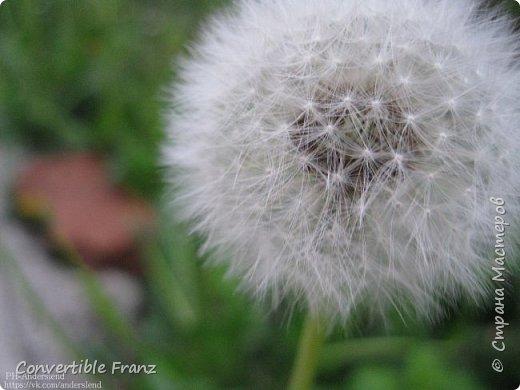 Flowers фото 1