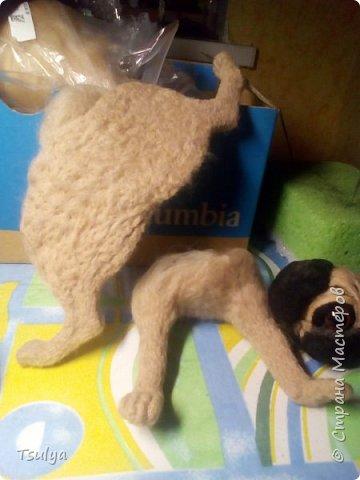 Вот такой звереныш появился у нас дома! фото 7