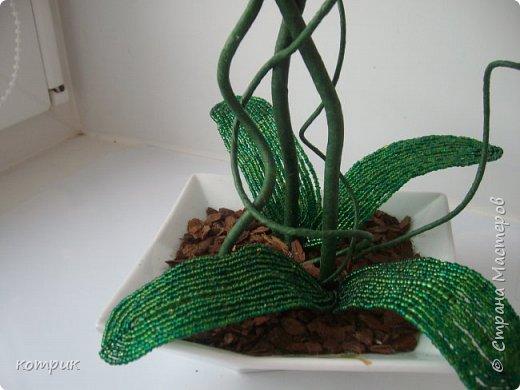 Вот такая орхидея получилась у меня по Мастер классу Вербицкой Наталии....)))))Далеко от шедевра мастера,но тоже неплохо...вроде...)))))) фото 2