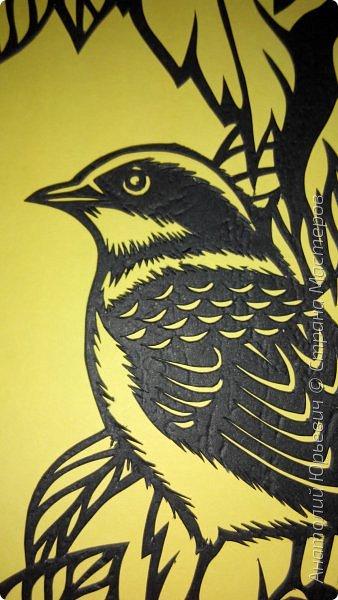 """Всем добрый день! Вашему вниманию новая открытка с птичкой.  -  Тигровый сорокопут  (лат. Lanius tigrinus) — маленькая птица отряда воробьиных, которая принадлежит роду сорокопуты. Этот вид сорокопутов получил своё имя из-за тигрообразной окраски оперения  красновато-коричневая спинка с чёрным поперечным рисунком. -  Обитает в лесистых местностях восточной Азии. В России гнездится только на юге Приморья, куда прилетает в начале июня. Встречается достаточно редко, поэтому включён в перечень объектов животного мира России, нуждающихся в особом внимании. Гнёзда строит на деревьях и кустарниках, откладывает три — шесть яиц. -  Как и другие сорокопуты, он питается насекомыми, мелкими пресмыкающимися и мелкими птицами и млекопитающими. -  Эскиз для """"вырезалки"""" выполнен, изменён и доработан по цветной работе китайского художника Zeng Xiao Lian. Размер - 12х16см. фото 4"""