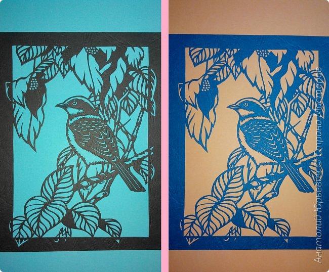 """Всем добрый день! Вашему вниманию новая открытка с птичкой.  -  Тигровый сорокопут  (лат. Lanius tigrinus) — маленькая птица отряда воробьиных, которая принадлежит роду сорокопуты. Этот вид сорокопутов получил своё имя из-за тигрообразной окраски оперения  красновато-коричневая спинка с чёрным поперечным рисунком. -  Обитает в лесистых местностях восточной Азии. В России гнездится только на юге Приморья, куда прилетает в начале июня. Встречается достаточно редко, поэтому включён в перечень объектов животного мира России, нуждающихся в особом внимании. Гнёзда строит на деревьях и кустарниках, откладывает три — шесть яиц. -  Как и другие сорокопуты, он питается насекомыми, мелкими пресмыкающимися и мелкими птицами и млекопитающими. -  Эскиз для """"вырезалки"""" выполнен, изменён и доработан по цветной работе китайского художника Zeng Xiao Lian. Размер - 12х16см. фото 6"""