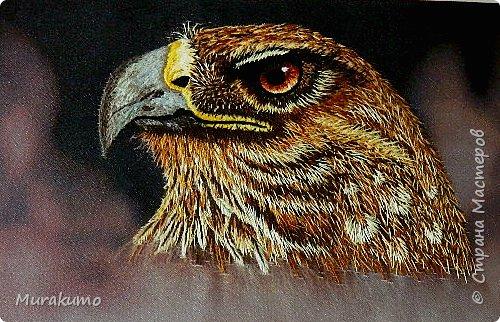 Следом за тигром не устаяла перед этим грозным взором орла))) фото 1