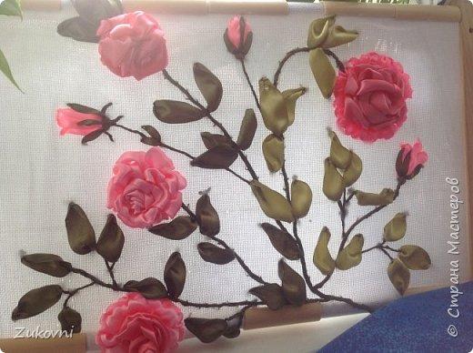 Ветка розы фото 1