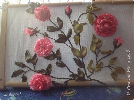 Ветка розы фото 3
