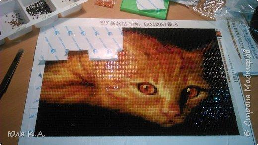 Никогда не заказывала товары в Китае, но когда увидела эту кошку, то мимо пройти не смогла. Влюбилась раз и навсегда!!! Какой у неё взгляд... Про алмазную вышивку слышала, но никогда не пробовала.  В целом могу сказать, что не пожалела! Размер взяла самый маленький - 20х30 см (хотя сейчас думаю, что надо было брать самый большой). Холст с клеевой основной и нанесенной картинкой с номерами (как при обычной вышивке, когда на канве уже проставлены номера). Каждому номеру соответствует свой цвет камушков. В комплекте были: пинцет, зеленая прямоугольная тарелочка, маленькие зип-пакеты и бумажка с инструкцией. Цвета были все, достаточно насыщенные. Алмазики прямоугольные, брака мало.  Пока посылка ехала, я прочитала много информации по алмазной вышивке. На каком-то форуме девочки писали, что лучше начинать с середины. Уж не помню по какой причине, но решила последовать совету (ведь при обычной вышивке крестиком тоже начинают с середины). фото 20