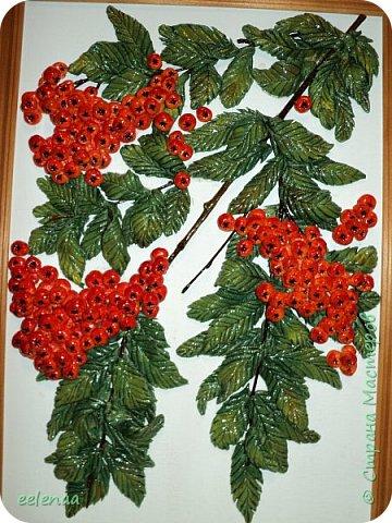 Северные ягоды. фото 2