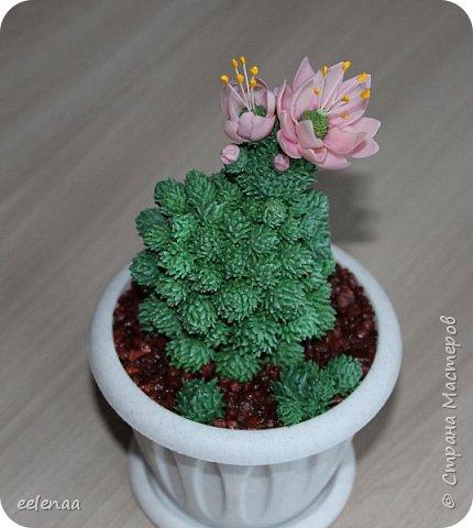кактус. фото 1