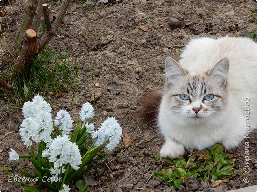 Вас приветствуют щенок Жулька и котик Тишка!!! Давай поиграем!!! фото 2