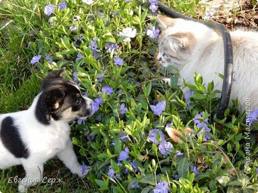 Вас приветствуют щенок Жулька и котик Тишка!!! Давай поиграем!!! фото 1