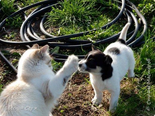Вас приветствуют щенок Жулька и котик Тишка!!! Давай поиграем!!! фото 13
