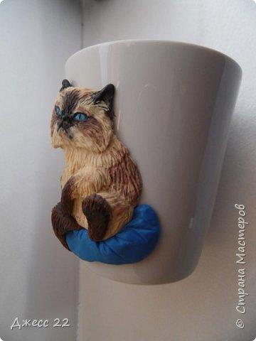 Кот по кличке Бонапарт. Можно наверно проще его Высочество))) фото 4