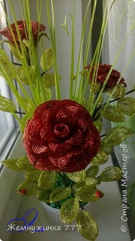 Кустик роз.  фото 8