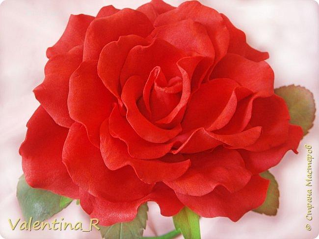 Вот теперь и у меня есть настольная роза. Высота получилась 29 см, диаметр цветка - 16 см. фото 2