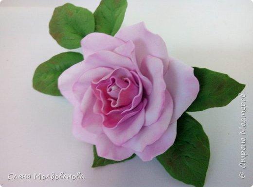 Роза с черникой фото 5