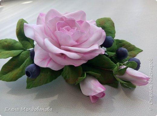 Роза с черникой фото 3