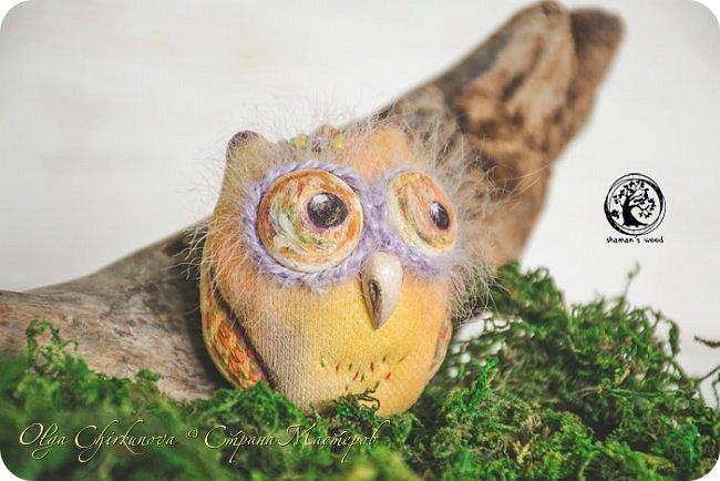 Кроме миллиона ежей, в лесу шамана живет много удивительных созданий!  Стеклопуз Солнечник —  хранитель надежды! фото 22