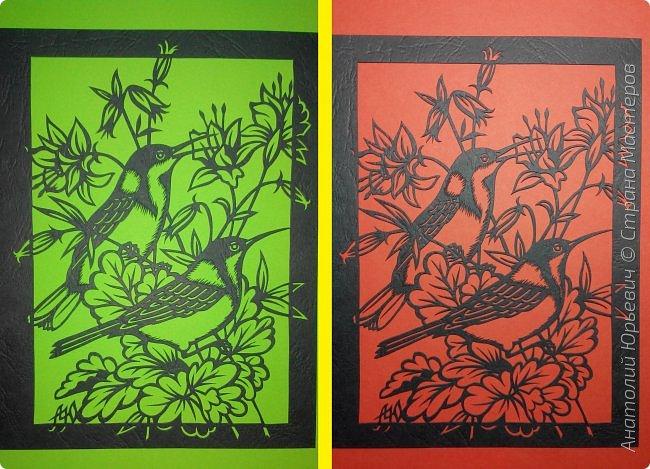 """Всем добрый день! Вашему вниманию новая открытка с птичками. - Восточный шилоклювый медосос (лат. Acanthorhynchus tenuirostris) — вид воробьинообразных птиц из семейства медососовых (Meliphagidae). - Встречается в восточной части Австралии. Питается нектаром множества растений, помимо нектара питается беспозвоночными - Эскиз для """"вырезалки"""" выполнен, изменён и доработан по цветной работе австралийской художницы Dtidre Hunt.  - Размер открытки 12х16см. фото 6"""