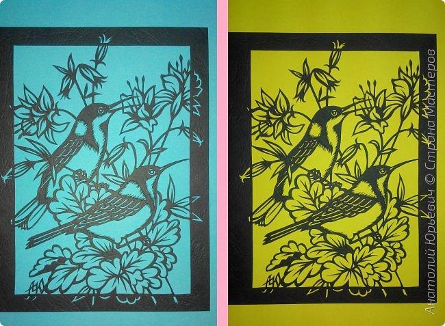 """Всем добрый день! Вашему вниманию новая открытка с птичками. - Восточный шилоклювый медосос (лат. Acanthorhynchus tenuirostris) — вид воробьинообразных птиц из семейства медососовых (Meliphagidae). - Встречается в восточной части Австралии. Питается нектаром множества растений, помимо нектара питается беспозвоночными - Эскиз для """"вырезалки"""" выполнен, изменён и доработан по цветной работе австралийской художницы Dtidre Hunt.  - Размер открытки 12х16см. фото 7"""