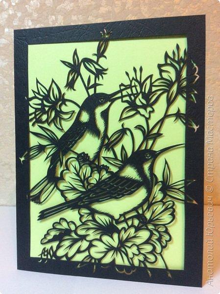 """Всем добрый день! Вашему вниманию новая открытка с птичками. - Восточный шилоклювый медосос (лат. Acanthorhynchus tenuirostris) — вид воробьинообразных птиц из семейства медососовых (Meliphagidae). - Встречается в восточной части Австралии. Питается нектаром множества растений, помимо нектара питается беспозвоночными - Эскиз для """"вырезалки"""" выполнен, изменён и доработан по цветной работе австралийской художницы Dtidre Hunt.  - Размер открытки 12х16см. фото 9"""