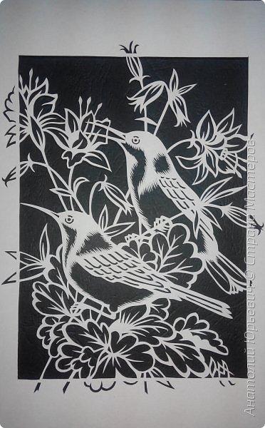 """Всем добрый день! Вашему вниманию новая открытка с птичками. - Восточный шилоклювый медосос (лат. Acanthorhynchus tenuirostris) — вид воробьинообразных птиц из семейства медососовых (Meliphagidae). - Встречается в восточной части Австралии. Питается нектаром множества растений, помимо нектара питается беспозвоночными - Эскиз для """"вырезалки"""" выполнен, изменён и доработан по цветной работе австралийской художницы Dtidre Hunt.  - Размер открытки 12х16см. фото 3"""