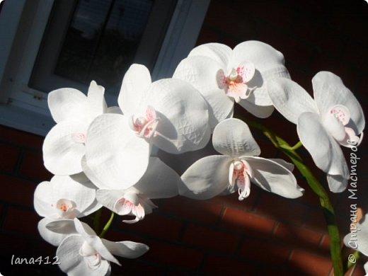 эту орхидею сделала для себя( а то сапожник без сапог)  фото 2