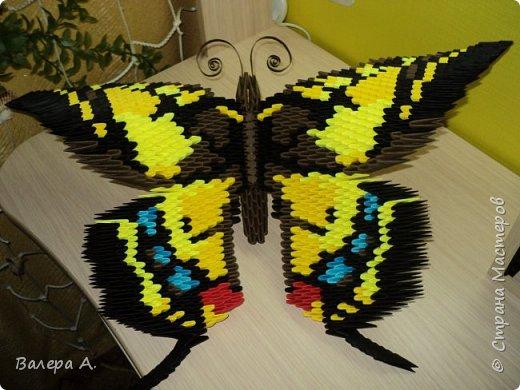 Бабочка махаон. фото 1