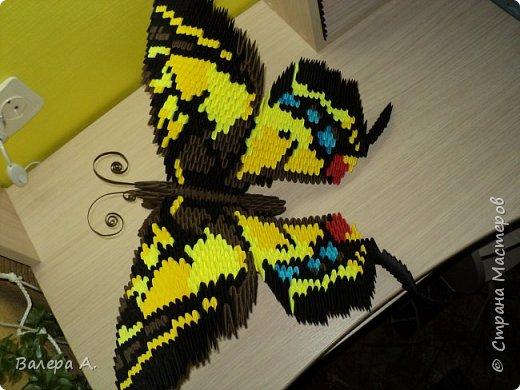 Бабочка махаон. фото 2